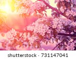 branch of a blossoming pear... | Shutterstock . vector #731147041