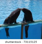 A Couple Of Seals Kissing In A...
