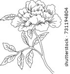 flower  lush flower bud ... | Shutterstock .eps vector #731194804