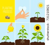 flower planting process vector... | Shutterstock .eps vector #731210821