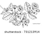 hand drawing and sketch jasmine ... | Shutterstock .eps vector #731213914