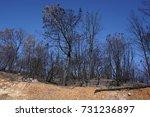 Dry Burnt California Hillside...