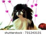 dog  very cute dog japanese... | Shutterstock . vector #731243131