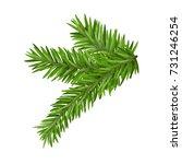 green lush spruce or pine... | Shutterstock .eps vector #731246254
