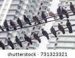 Small photo of Pigeonhole.......Pigeon rest over the wires in front of the apartment.it feels like the future housing development will getting small like pigeonhole.