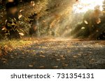 autumn path | Shutterstock . vector #731354131