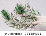 two feathers of a bird peacock