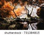 deep forest waterfalls | Shutterstock . vector #731384815