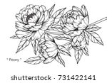 hand drawing and sketch peony... | Shutterstock .eps vector #731422141