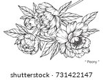 hand drawing and sketch peony... | Shutterstock .eps vector #731422147