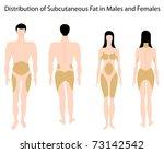 Subcutaneous fat distribution in human - stock photo