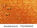 bee honeycombs with honey and... | Shutterstock . vector #731434465