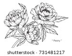 Stock vector hand drawing and sketch peony flower black and white with line art illustration 731481217
