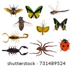 Set of ten insects isolated on...