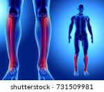 3d illustration of fibula  ... | Shutterstock . vector #731509981