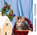 cute kitten near gingerbread... | Shutterstock . vector #731532655