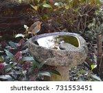 Robin By Bird Bath