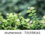 leave background   Shutterstock . vector #731558161