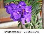 flower | Shutterstock . vector #731588641