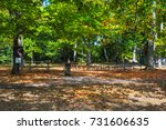 leaves are falling from the... | Shutterstock . vector #731606635