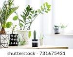 interior of a home garden... | Shutterstock . vector #731675431