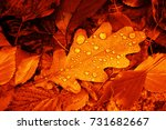 Fallen Oak Leaves With Dew....