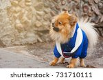 the wear dog ot the asphalt... | Shutterstock . vector #731710111