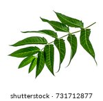 autumn leaves on a white... | Shutterstock . vector #731712877