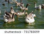 gooses in a flock | Shutterstock . vector #731783059