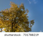 the colors of autumn | Shutterstock . vector #731788219