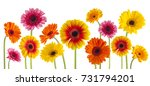 colorful gerbera flowers... | Shutterstock . vector #731794201
