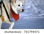dog on the snow  | Shutterstock . vector #731794471