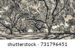 oak alley plantation panoramic... | Shutterstock . vector #731796451