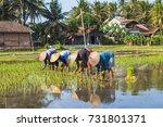 women working on rice field... | Shutterstock . vector #731801371