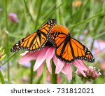 two monarch butterflies with... | Shutterstock . vector #731812021