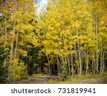 Aspen Trees Surround An Old...