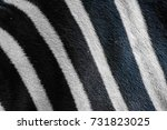 close up zebra skin pattern... | Shutterstock . vector #731823025