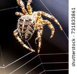 Spider Building A Web