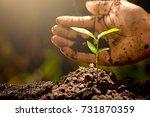 men hands are planting the... | Shutterstock . vector #731870359