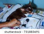 dog birth newborn birthing ... | Shutterstock . vector #731883691