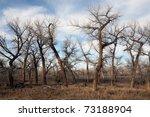 Dead Tree Landscape In Late Sun ...