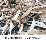 autumn background of dried... | Shutterstock . vector #731904829