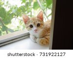 Stock photo cute kitten 731922127