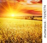 wheat field at sunset.   Shutterstock . vector #73192774