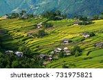 rice terraces | Shutterstock . vector #731975821