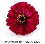 Gerbera Flower Isolated On...