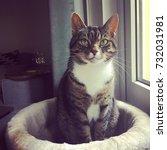 Stock photo cute cat with big ears posing like a model 732031981