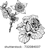 set with ink black and white... | Shutterstock .eps vector #732084037