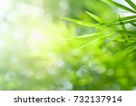 closeup nature view of green... | Shutterstock . vector #732137914