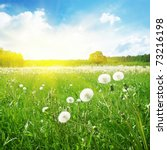 summer field and sunlight in... | Shutterstock . vector #73216198